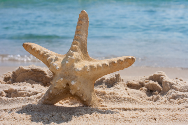 Product picture Starfish on the beach